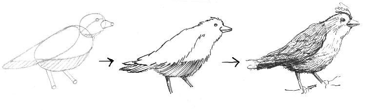Marches pour oiseaux