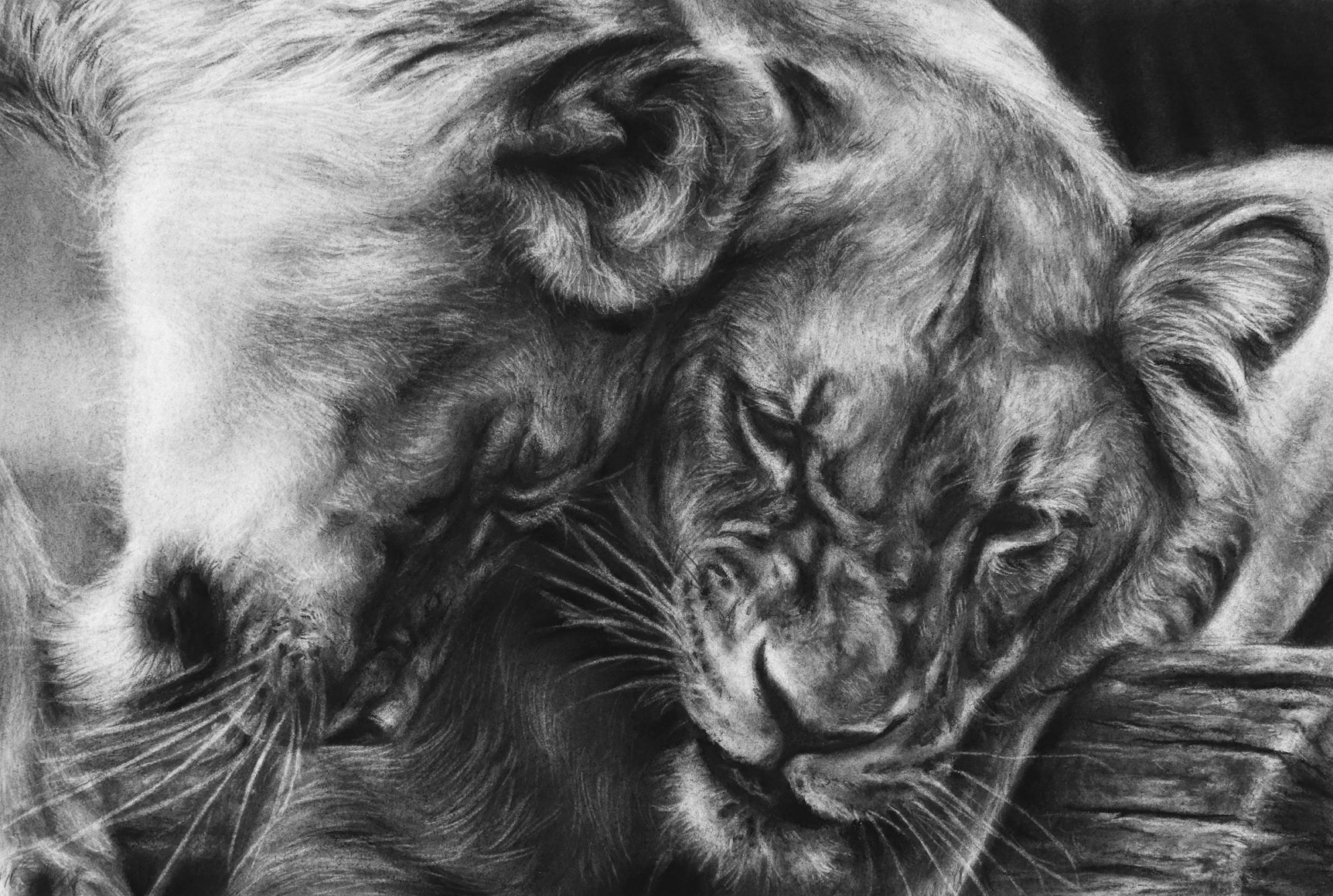 Realistic Drawing with Charcoal - Strathmore Artist Papers